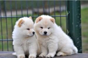 Fotos_de_cachorros_filhotes_4