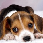 Fotos de cachorros filhotes