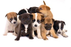 Fotos_de_cachorros_filhotes_topo