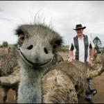 Fotos engraçadas de animais