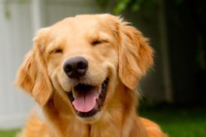 Saiba_10_curiosidades_sobre_cachorros