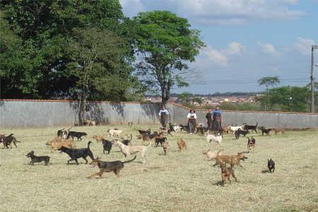 ONG de cães Abrigo Piccolina em Avaré