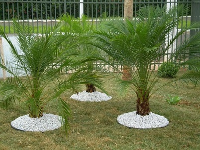 Plantas de medio porte para jardim