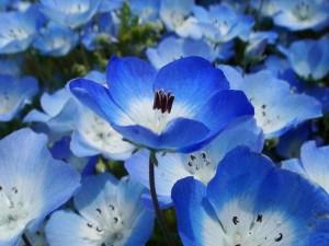 Dicas_de_fotos_de_flores_azuis_3