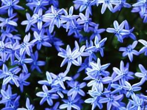 Dicas_de_fotos_de_flores_azuis_4