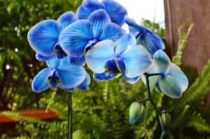 Dicas_de_fotos_de_flores_azuis_6