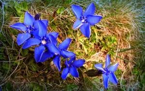 Dicas_de_fotos_de_flores_azuis_8