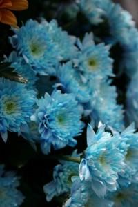 Dicas_de_fotos_de_flores_azuis_9