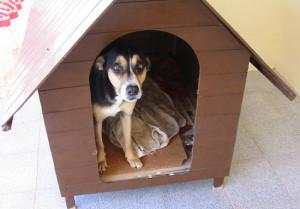 Dicas e fotos de Casinha de cachorro 12