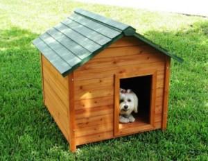 Dicas e fotos de Casinha de cachorro 7