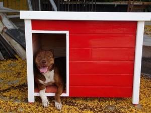 Dicas e fotos de Casinha de cachorro 8