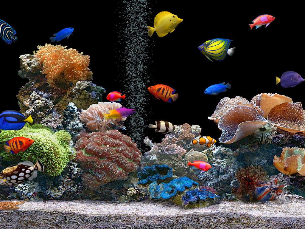 Fotos de peixes ornamentais em aquários