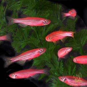 Fotos de peixes ornamentais em aquários 11