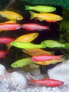 Fotos de peixes ornamentais em aquários 12