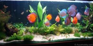 Fotos de peixes ornamentais em aquários 2