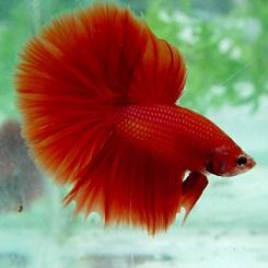 Fotos de peixes ornamentais em aquários 5