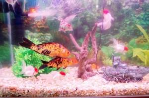 Fotos de peixes ornamentais em aquários 6