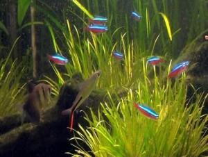 Fotos de peixes ornamentais em aquários 8