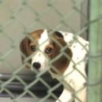 Onde fazer doação de cachorro em SP