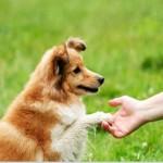 Dicas de Adestramento de Cães Básico