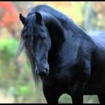 Fotos e imagens de Cavalos Bonitos