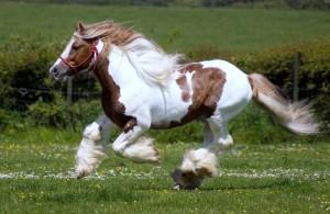 Fotos e imagens de Cavalos Bonitos 10