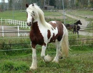 Fotos e imagens de Cavalos Bonitos 11