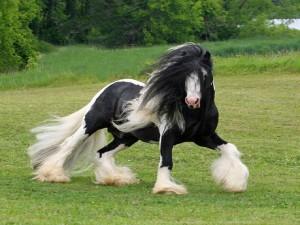 Fotos e imagens de Cavalos Bonitos 12