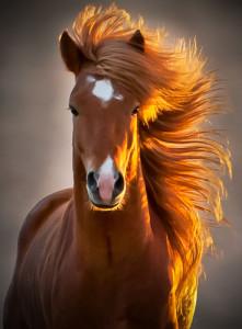 Fotos e imagens de Cavalos Bonitos 13