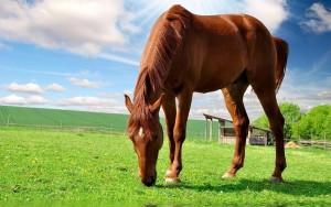 Fotos e imagens de Cavalos Bonitos 14
