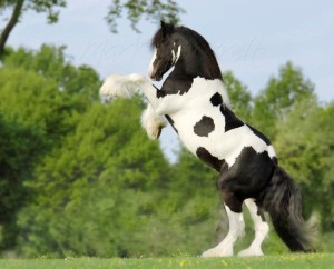 Fotos e imagens de Cavalos Bonitos 4