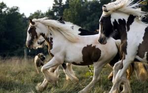 Fotos e imagens de Cavalos Bonitos 6