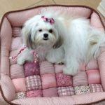 Aprenda Como Fazer Cama Para Cachorro
