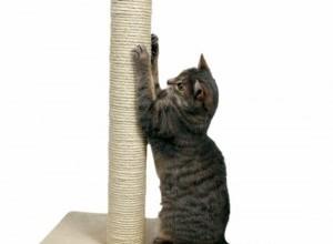 Como Fazer Um Arranhador Para Gatos