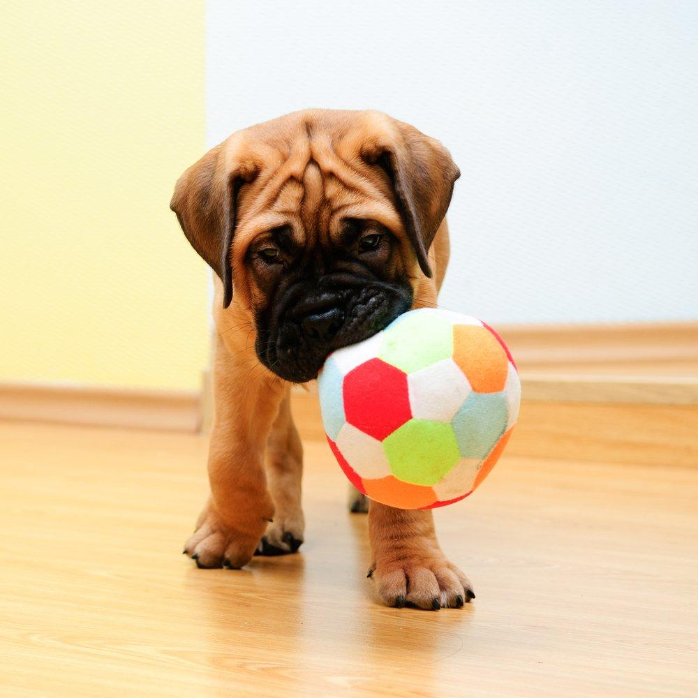 comprar brinquedos para cachorro barato