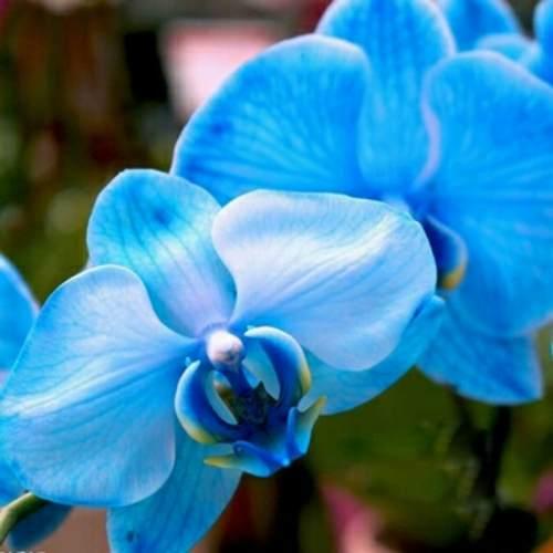 Dicas Como Cuidar de Orquídeas em Vaso