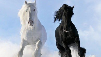 Ver Fotos De Cavalos Lindos