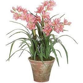 flores para ambientes internos