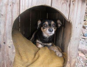 Pessoas Que Fazem Resgate De Cachorro Merecem Nosso Respeito