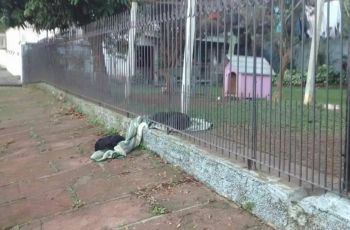 Cadela divide cobertor com cachorro de rua e foto viraliza na Internet